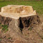 BUND-Baumreport 2010/2011 – Marzahn-Hellersdorf verliert weiter Straßenbäume