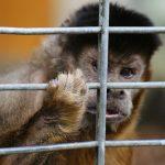 Alternativforschung fördern – Tierschutz ermöglichen!