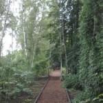 Berlin braucht Rettungs- und Nachpflanzungsprogramm für Bäume