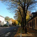 Zukunft der Stadtbäume in Marzahn-Hellersdorf – Grünes Schlossgespräch