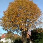 Bäume für Berlin – Baumstammtisch des BUND Berlin nimmt Arbeit auf!