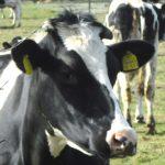 Tierische Landschaftspflege auf der IGA 2017