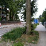 Planungen für die Lemkestraße: Baumerhalt und zweiter Bauabschnitt